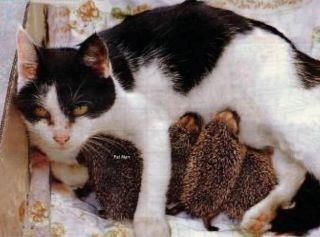 mother-cat