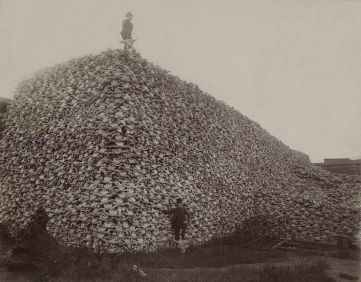 767px-Bison_skull_pile_edit